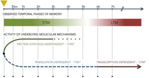 MemoryPhases